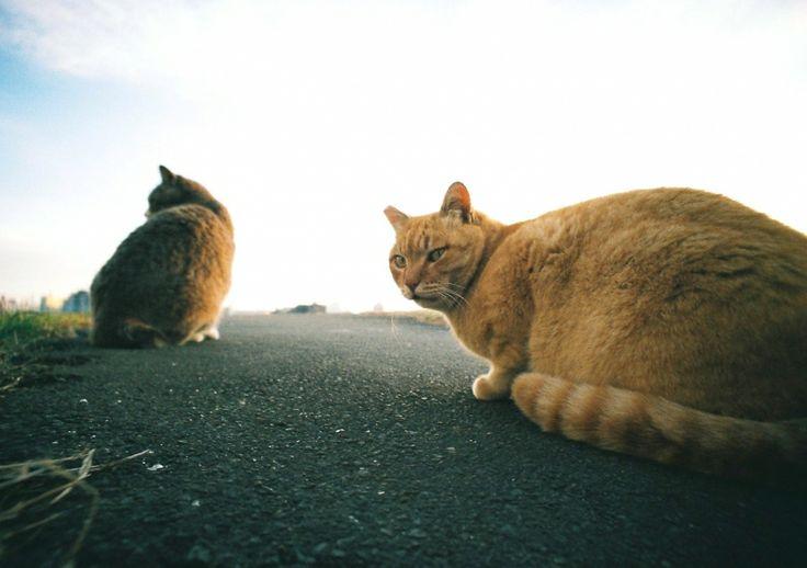 LOMO LC-Wide - 野良猫のワルツ - FujiC200 毎月22日は猫の日 - Camera Talk -