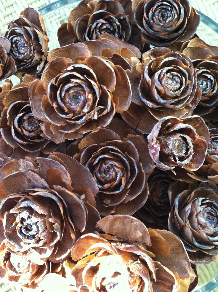 Rose pinecones  ---  These would be lovely spray painted gold, silver and copper!