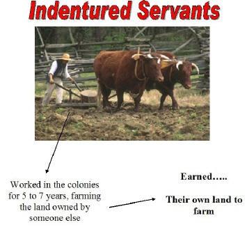 Essay indentured labour