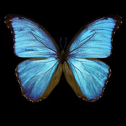 Heiko Hellwig, Butterfly III, 2015 / 2015 © www.lumas.de/ #Lumasblau,  Fotografie,  Insekt,  Insekten,  Natur,  Schmetterling,  Schmetterlinge,  Tier,  Tiere