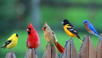 Die schönsten Vögel der Welt mit lustigen Fakten und Bildern   – Birds & Birdhouses