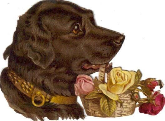 Victorian Die Cut Scrap Black Lab Dog carries Rose Basket c1880