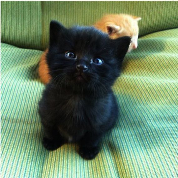 Cute Animals Funny Pictures At Cute Baby Animals Cartoon Coloring Pages Behind Adorable Kittens Fluffy Kittens Cutest Cute Animals Animals