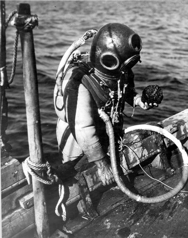 A sponge diver comes up with his catch. (1944) | Florida Memory Tarpon Springs