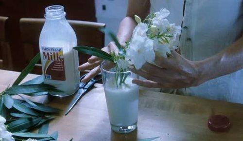 17 best white oleander quotes on pinterest white