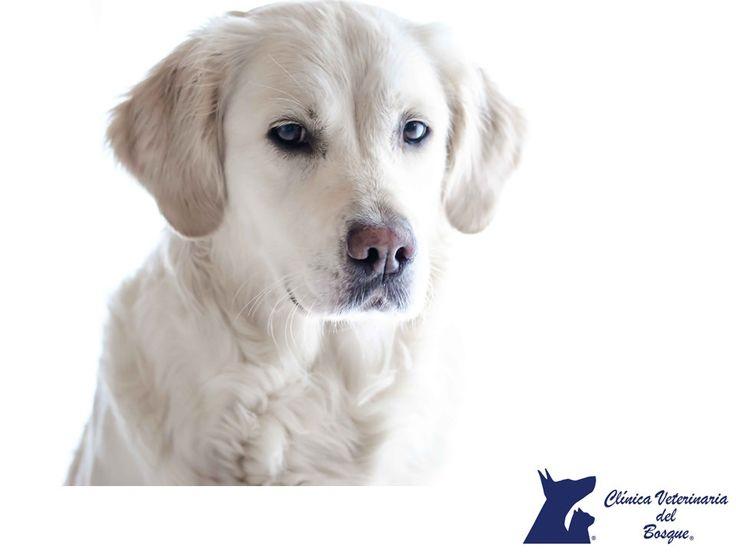 https://flic.kr/p/U8suMu   Protege la piel de tu perro en primavera. CLÍNICA VETERINARIA DEL BOSQUE 1   Protege la piel de tu perro en primavera. CLÍNICA VETERINARIA DEL BOSQUE. En la temporada de primavera algunos perros pueden sufrir diferentes reacciones como comezón en ciertas zonas, enrojecimiento, resequedad o problemas en la piel, provocados por parásitos u otros agentes externos. La alergia es la causa del 70% de las enfermedades de piel en perros, por esta razón en Clínica…