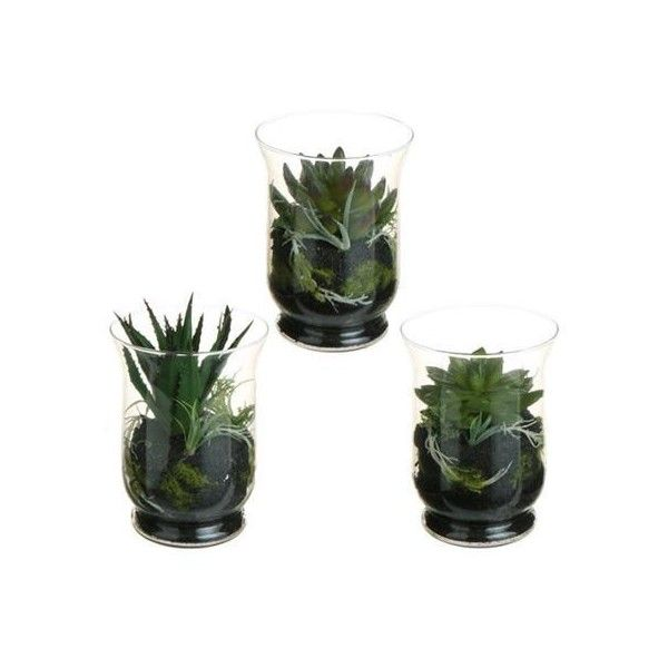 Set of 3 Southwestern Mixed Artificial Cactus and Succulent Plant... ❤ liked on Polyvore featuring home, home decor, floral decor, fillers, succulent terrarium and cactus terrarium
