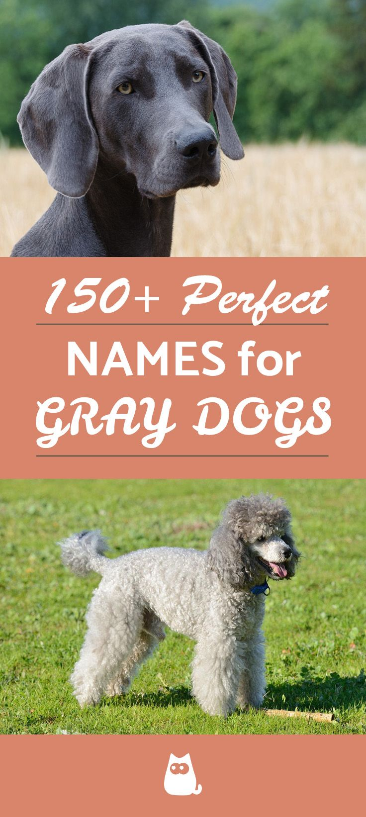 150 Great Names For Gray Dogs Male Female Grey Dog Black Dog Names Dog Names