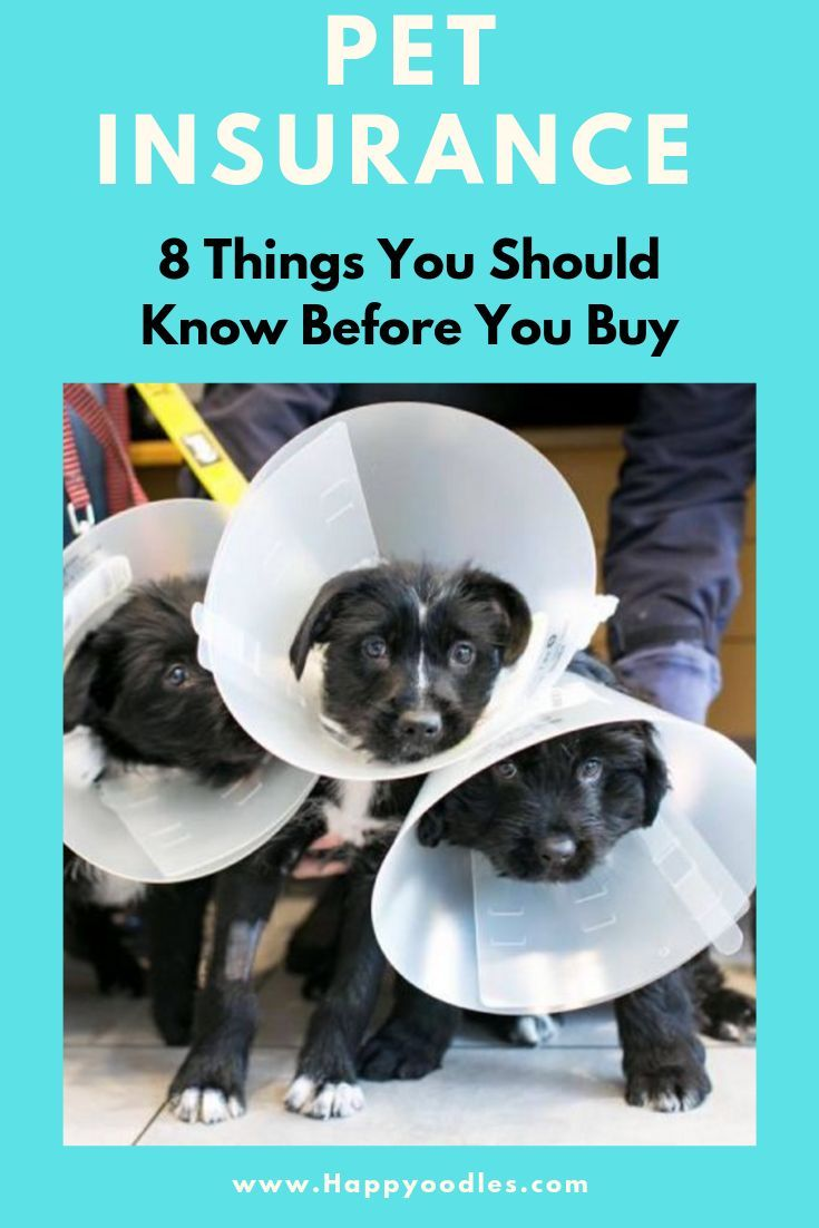 Pet Insurance 8 Things You Should Know Dog Insurance Pet