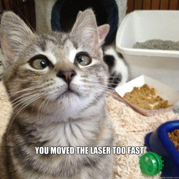 Funny Animal Videos Cats