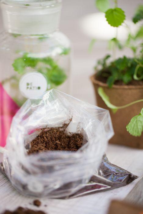Menta, melissa, poleo o stevia ??.... lleva a tu depto  la planta que tu quieras.