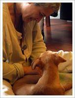 http://cursosterapiasparaanimales.blogspot.com www.terapias-para-animales.com