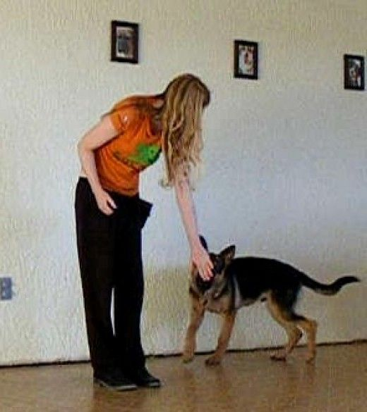 German shepherd bite inhibition games.
