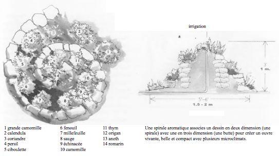 spirale aromatique