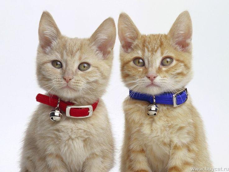 Funny Cats - Cats Wallpaper (9473312) - Fanpop
