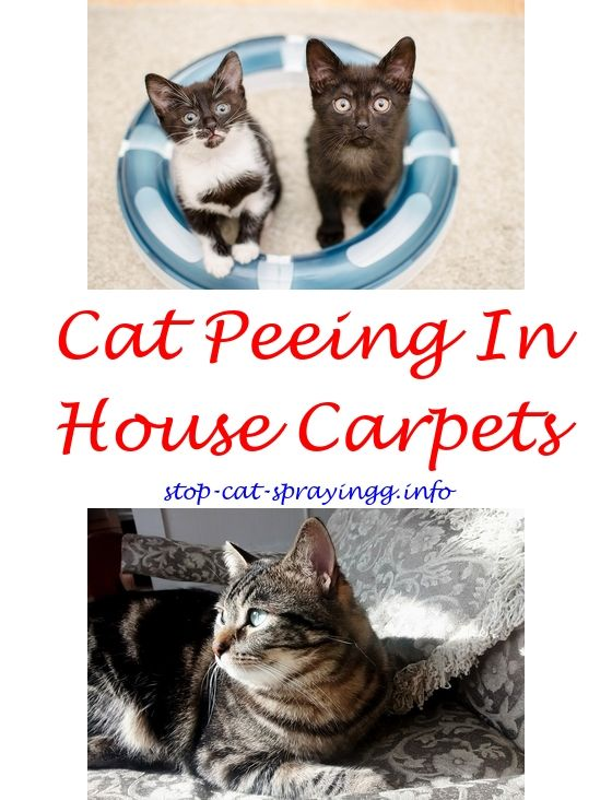 Indoor Male Cat Spraying Spray For Wires Home Remedy To Keep Cats From Scratching Furniture How Stop
