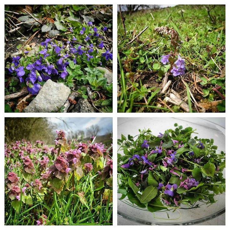 Purple Spring Flower Salad, in Belgium