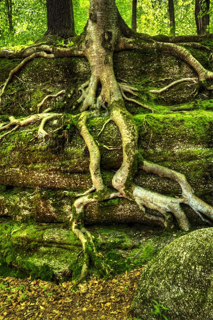 Tree Roots by Michael Shake on 500px
