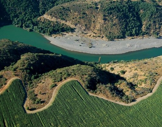 New scenarios for growing grapes in Chile  http://www.conchaytoro.com/winemakers-journal/new-scenarios-for-growing-grapes-in-chile/