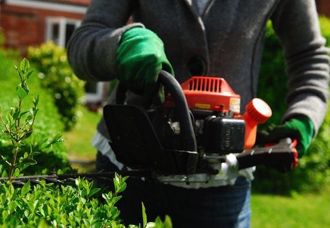 Radio Sharpening Your Hedge Trimmer Hedges Lawn Maintenance