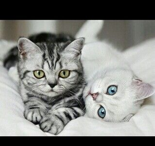 Reminds me of Graystripe and Silverstream.