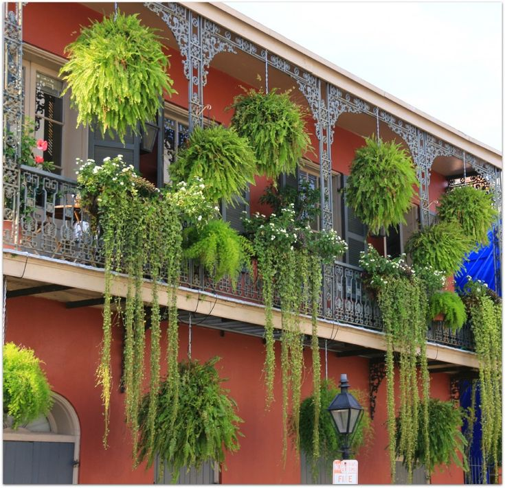 new orleans classic interiors   Ferns In New Orleans French Quarter Balconies