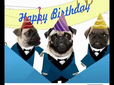 Best 25 Happy Birthday Pug Ideas On Pinterest