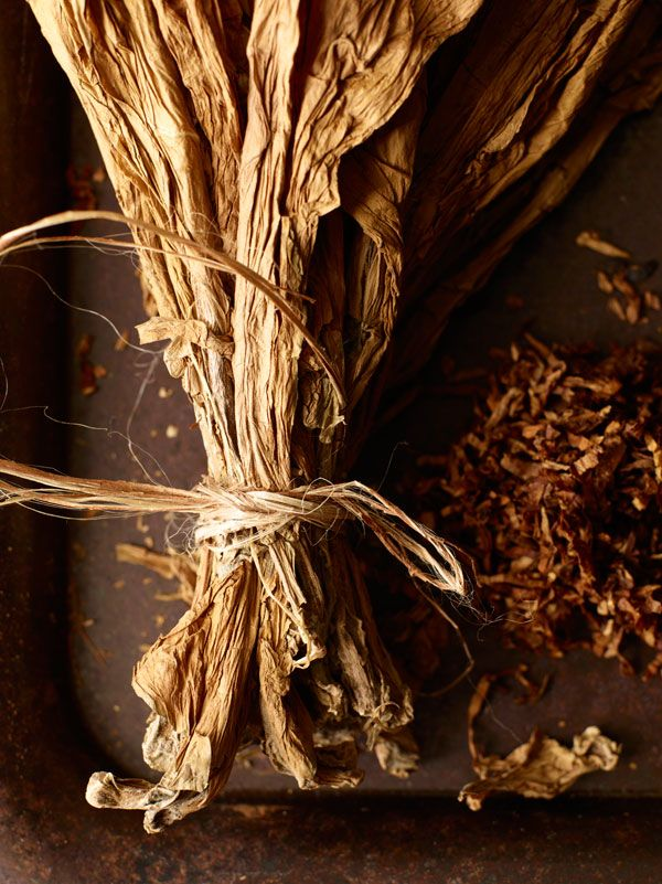 Broad leaves, kiln fired, transmute a weed into an aromatic wonder that has conquered the world. Before it became a scourge, it was sacred to some of the world's earliest peoples. Like many such medicines, tobacco began its life as a gift from the gods, to whom it would return with messages from the living when smoked. From dark pitch to burnt caramel to sweet fruit, and always laced with wood, the smell of cured tobacco makes its way into many wines, most often thanks to wood…