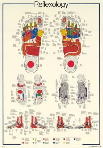 Reflexology Foot Massage Anatomy Poster