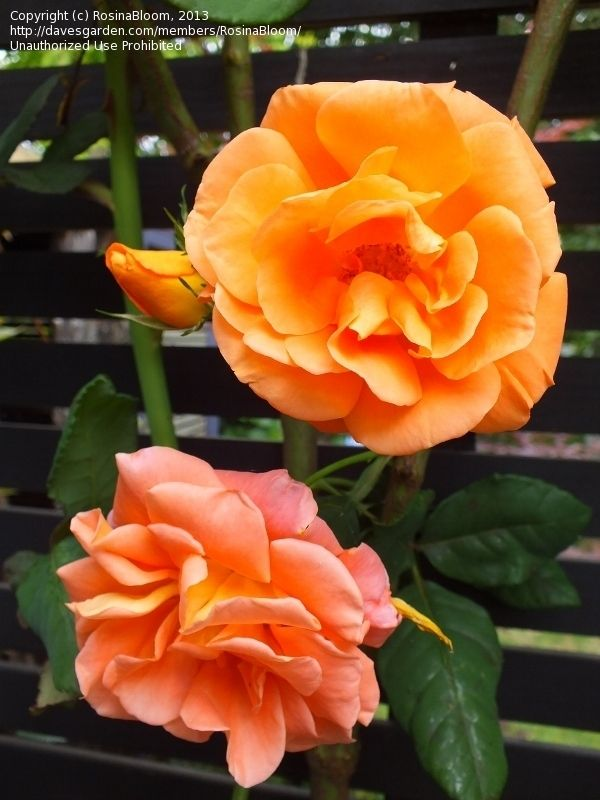 35 Best Images About Cool Yard And Garden Orange