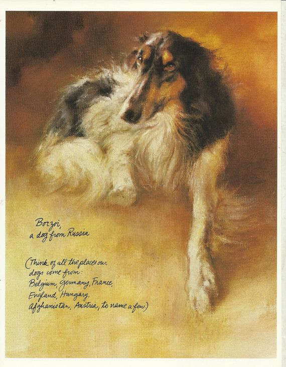 Borzoi Russian Wolfhound by Rien Poortvliet 1983 colour dog print                     lb xxx.
