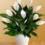Полезно для здоровья 6 Замечательные цветы - женские сайты