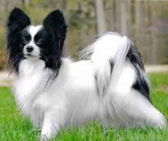 El perrito llamado Remo http://www.encuentos.com/cuentos-con-moraleja/el-perrito-llamado-remo/