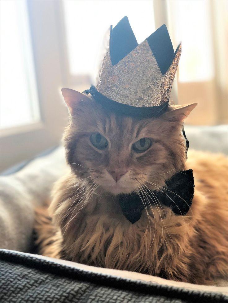 Garfield's Happy Tail in 2020 Orange cat, Veterinary