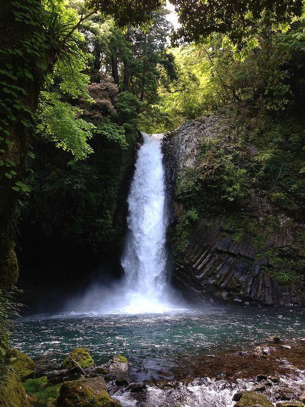 <伊豆おすすめスポット> 隣にわさび田もある綺麗な水質の浄蓮の滝
