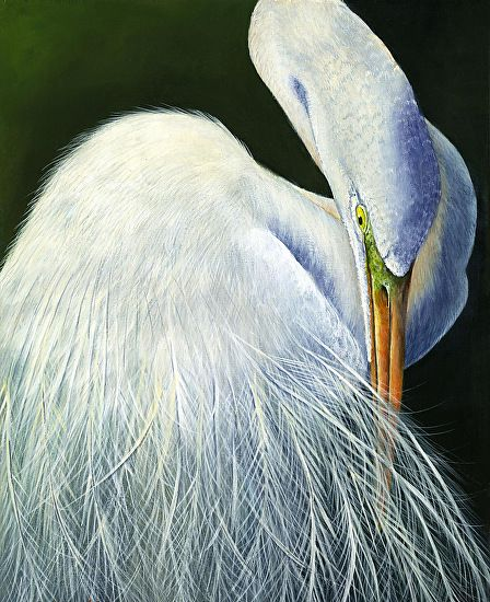 1000 images about white egret on pinterest birds wings for White heron paint