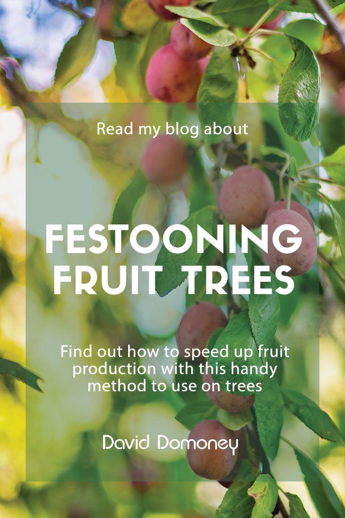 Festooning Fruit Trees David Domoney Fruit Trees Tree Small Garden