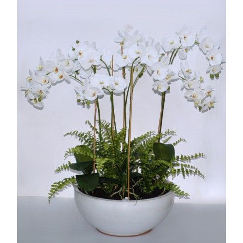 """31.5"""" WHITE PHALAENOPSIS IN WIDE POT"""