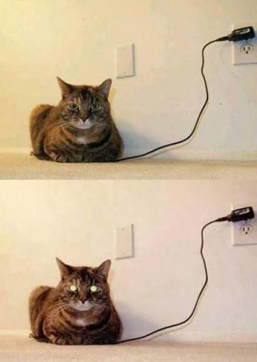 OO | Cat recharge
