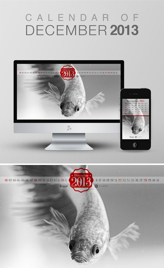 """For the last month of the year 2013, I shoot a fighter fish. In my country they call it """"Cupang"""". Wallpaper calendar of December 2013 from iBrandStudio"""