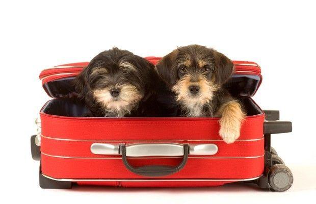 Passaportes para cães e gatos começam a sair em 90 dias (Foto: Shutterstock)