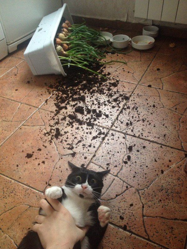 Сначала докажи! — Котики правят интернетом