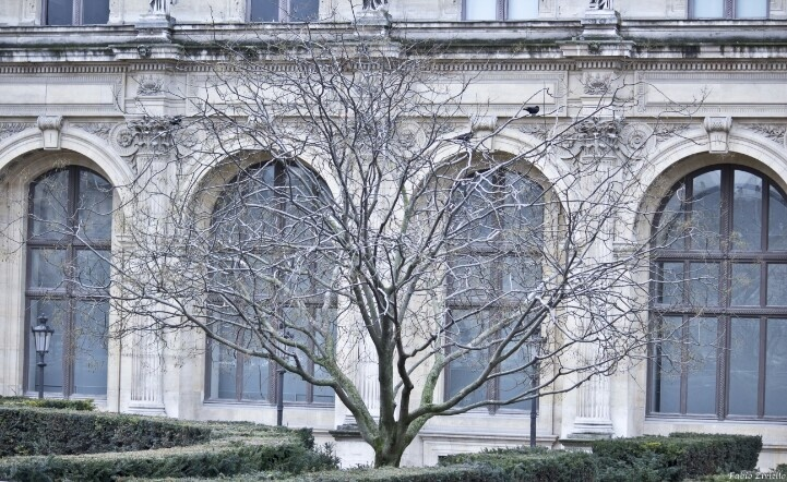 Albero museo Parigi