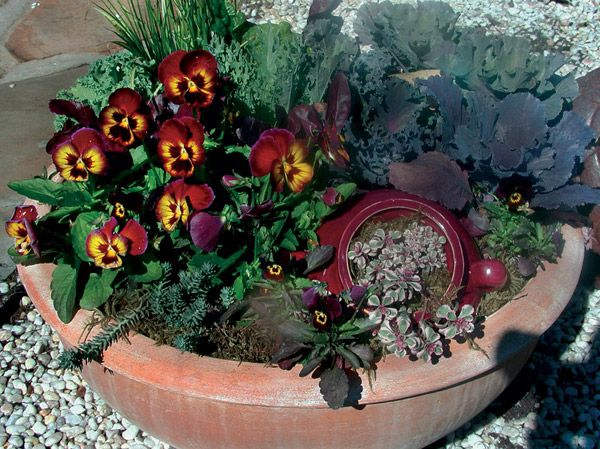 """Combining pansies with tall, textured plants increases the pansies' impact in a pot. Don't be afraid to use any plant that is hardy to your area. A """"pot in a pot"""" is also a great way to use plants that need different soil requirements, such as cold hardy sedums."""
