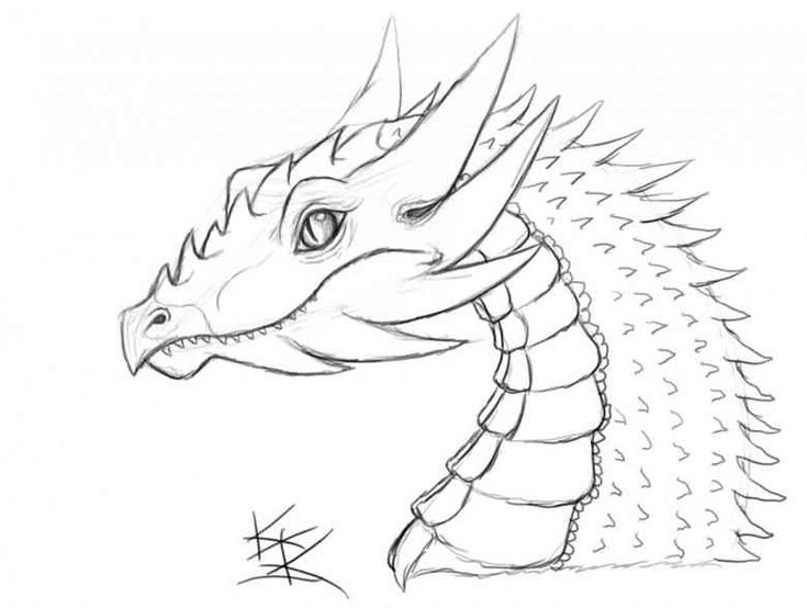 How to Sketch a Dragon Step by Step Dragons Draw a