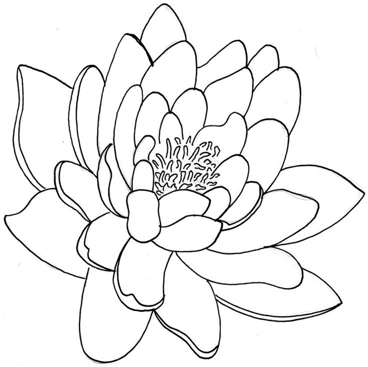 Flower Outline Drawing : Best lotus flower tattoo outline images on pinterest