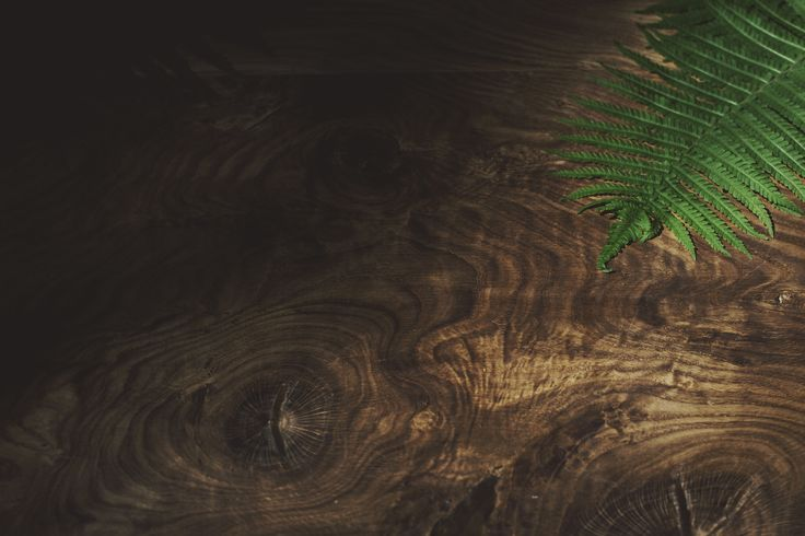 IN WOOD WE TRUST   www.iwwt.pl https://www.facebook.com/inwoodwetrustpolska/    photos: Aleksandra Gach // http://aleksandragach.tumblr.com  #inwoodwetrust #iwwt #woodworking #woodporn #woodart #wooddesign #woodtable #woodentables #woodcoffeetable #woodencoffeetables #oak #bogoak #ash #americanwalnut #design #wooddesign #polishdesign #interior #for.rest #intothewoods #etsy #dawanda