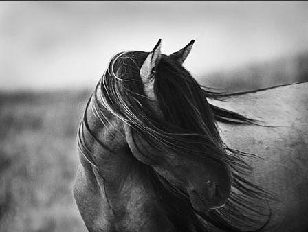 Tony Stromberg - Spirit Horse | Flickr - Photo Sharing!