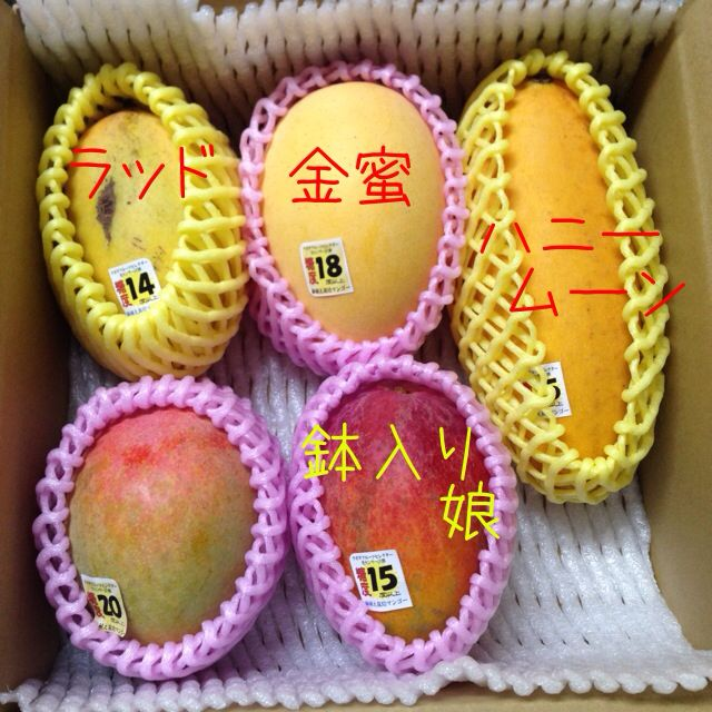 安田農園のマンゴーいろいろ。
