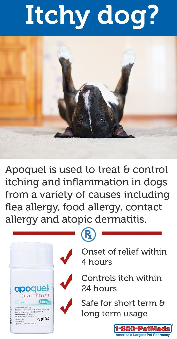 Apoquel is used to treat and control itching and inflammation in dogs resulting from a variety of causes, including flea allergy, food allergy, contact allergy and atopic dermatitis. Apoquel delivers onset of relief within 4 hours. It effectively controls itching within 24 hours. Apoquel requires a prescription from your veterinarian, and is sold per tablet.